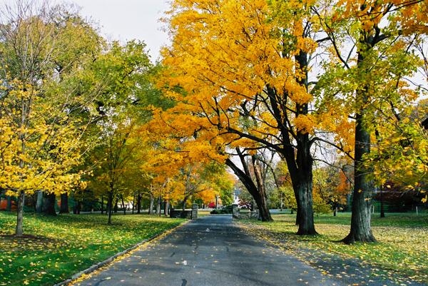 fall seasons